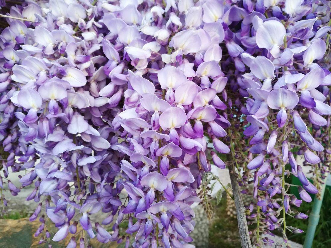 Spring Flowers Springtime Flowers Beauty In Nature Sky Dawn Light Morning Morning Light Morning Sky Fiori Petals White Primavera Blooming Fioritura Nature Natura Delicato Tenue Floreale Tree Beautiful Albero Purple