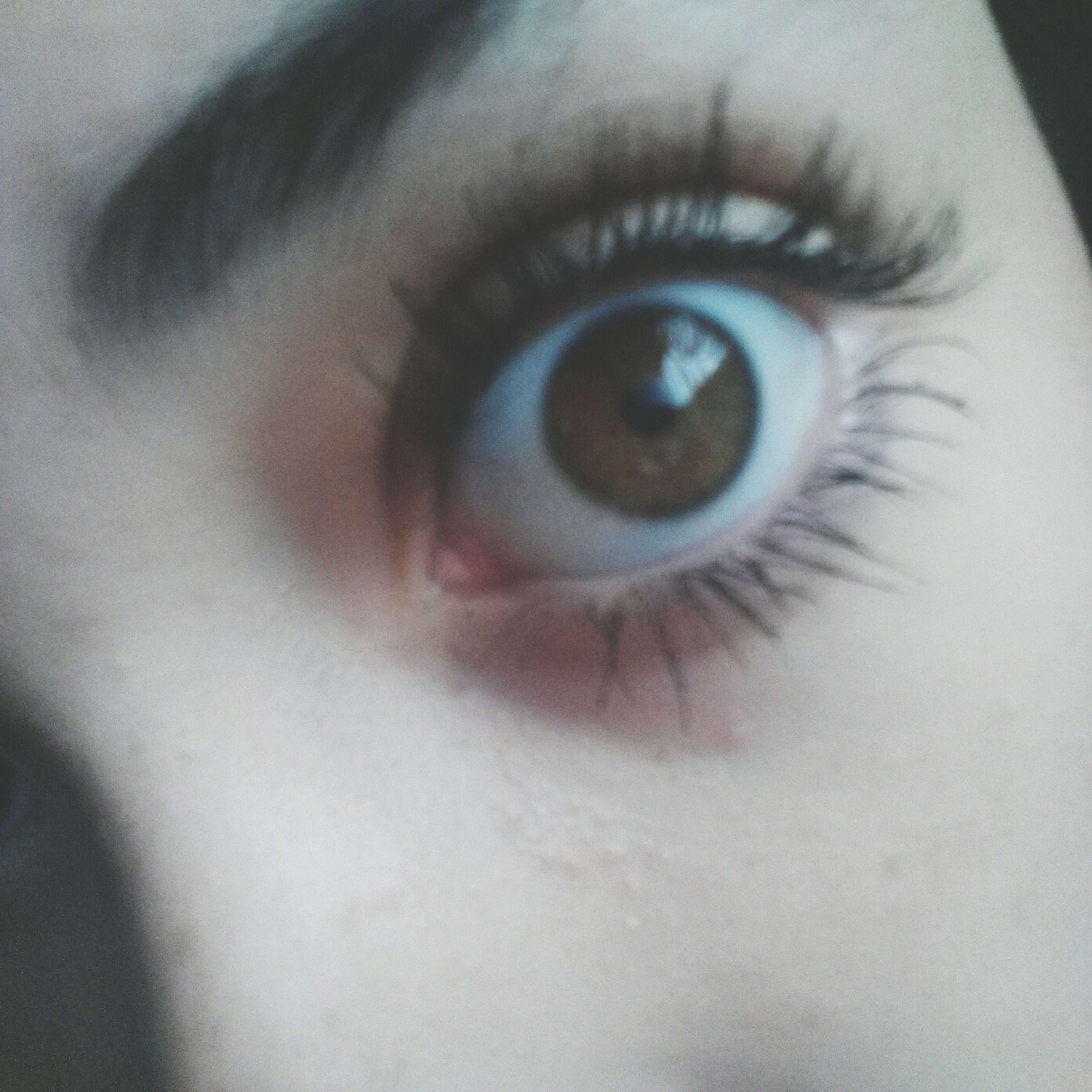 human eye, eyelash, close-up, eyesight, sensory perception, human skin, extreme close-up, indoors, part of, eyeball, iris - eye, looking at camera, extreme close up, person, lifestyles, portrait, unrecognizable person