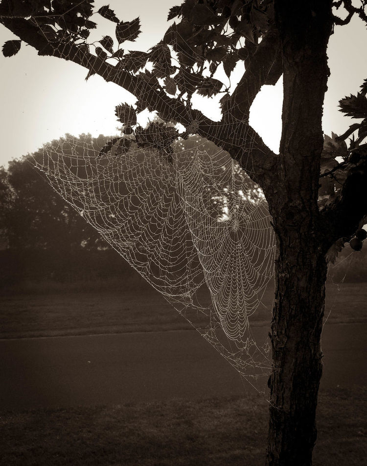 Beauty In Nature Day Halloween Nature No People Outdoors Sky Spiderweb Spooky Spooky Trees Sunset Tree