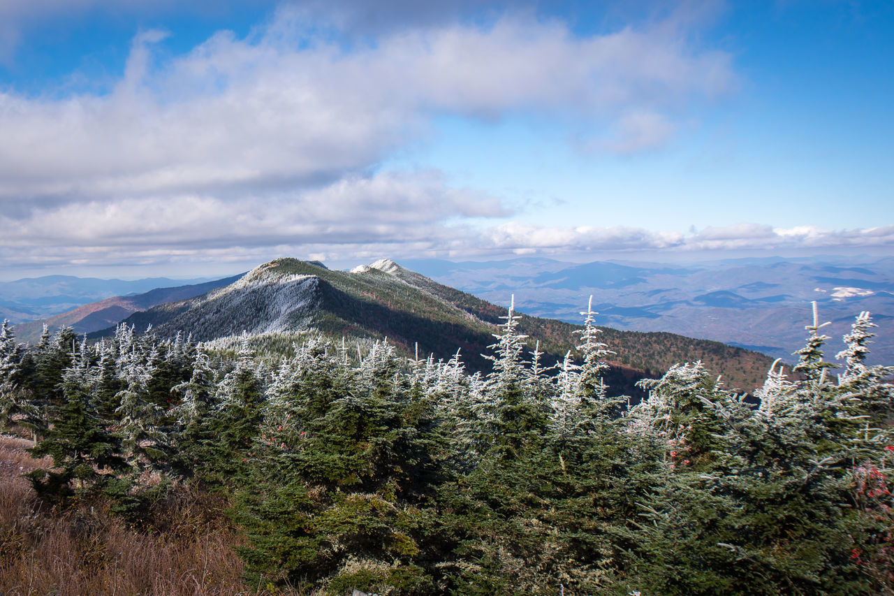 Asheville, NC Beauty In Nature Blue Blue Ridge Mountains Blue Ridge Parkway Cloud - Sky Day Hoar Frost Landscape Mount Mitchell Mount Mitchell State Park Mountain Nature No People Outdoors Plant Scenics Sky Tranquility Travel Destinations Tree The Great Outdoors - 2017 EyeEm Awards