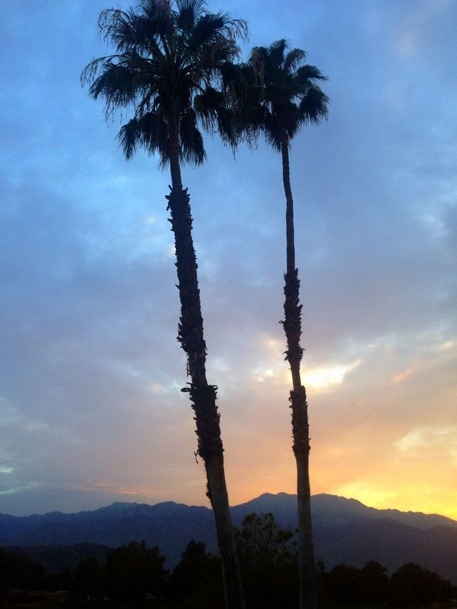 My Favorite Things Palm Trees Sunset Walking Around