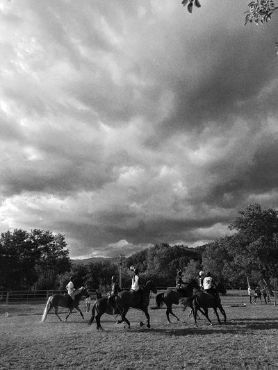 Dusty Road Dust Country People Country Life Horse Carousel Horse Horses Blackandwhite Outdoors Domestic Animals Real People Countryfair Day Nature Horserider Horseball Taking Photos Cellphone Photography Enjoying Life