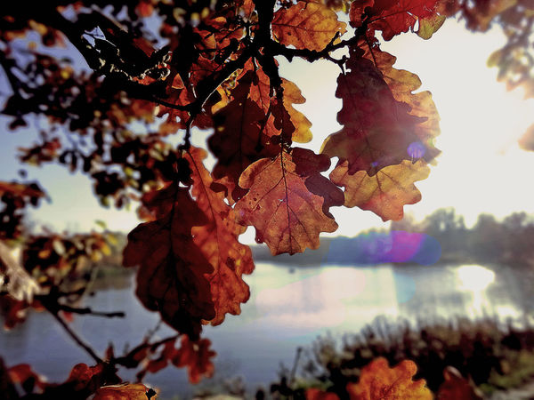Autumn Beauty In Nature Beauty In Nature Blue Sky Eye4photography  EyeEm Nature Lover From Where I Stand Nature Outdoors Sky Sunlight Tree Water Reflections