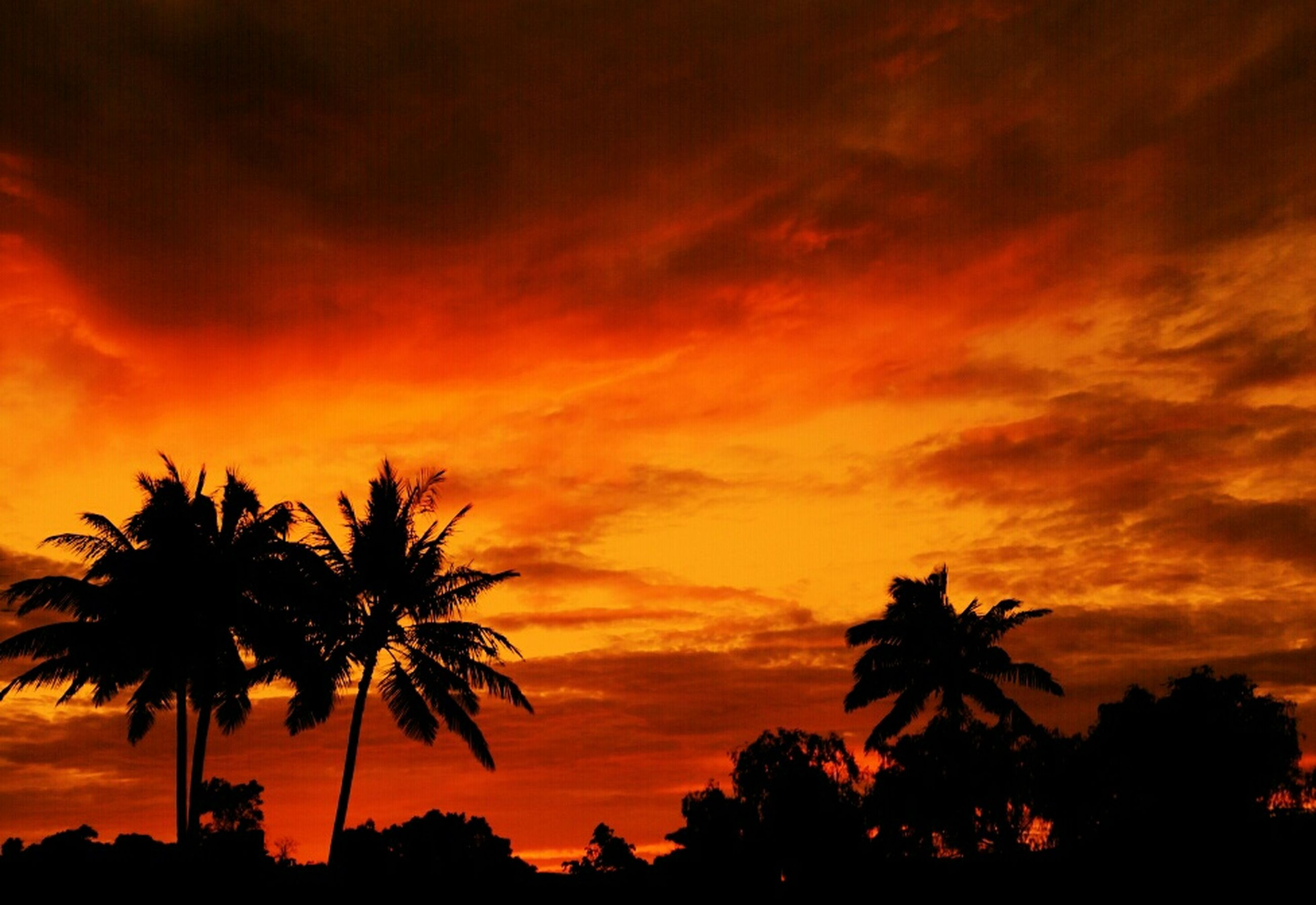 sunset, silhouette, sky, tree, palm tree, beauty in nature, orange color, scenics, tranquility, cloud - sky, dramatic sky, tranquil scene, low angle view, nature, idyllic, growth, cloudy, cloud, moody sky, atmospheric mood