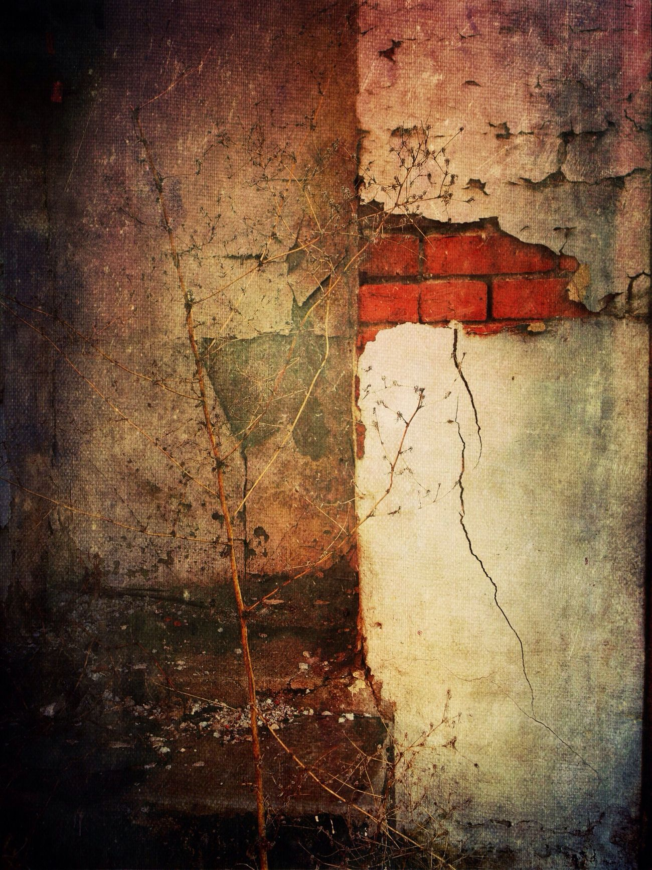 Beauty Of Decay Urban Decay Mextures IPhoneography