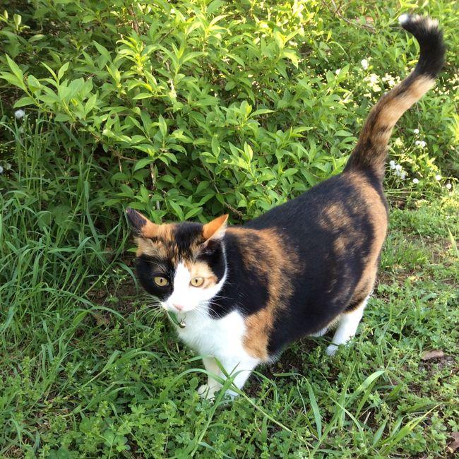 Hellis, my little cat, in the garden... Cat Cat Lovers Naturelovers Les Landes Aquitaine France