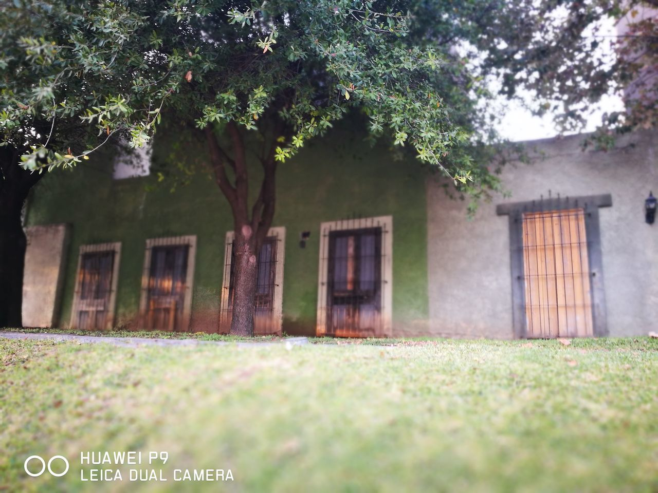 Casona Antigua. Tree Plant Growth No People Flower Green Color Nature Outdoors Grass Built Structure Architecture Day