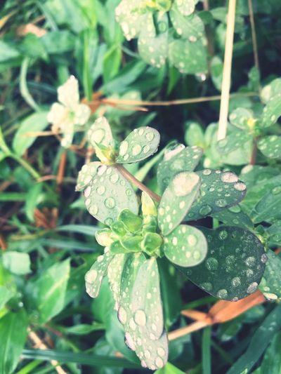 Raindrops When It Rains In Summer Seasons