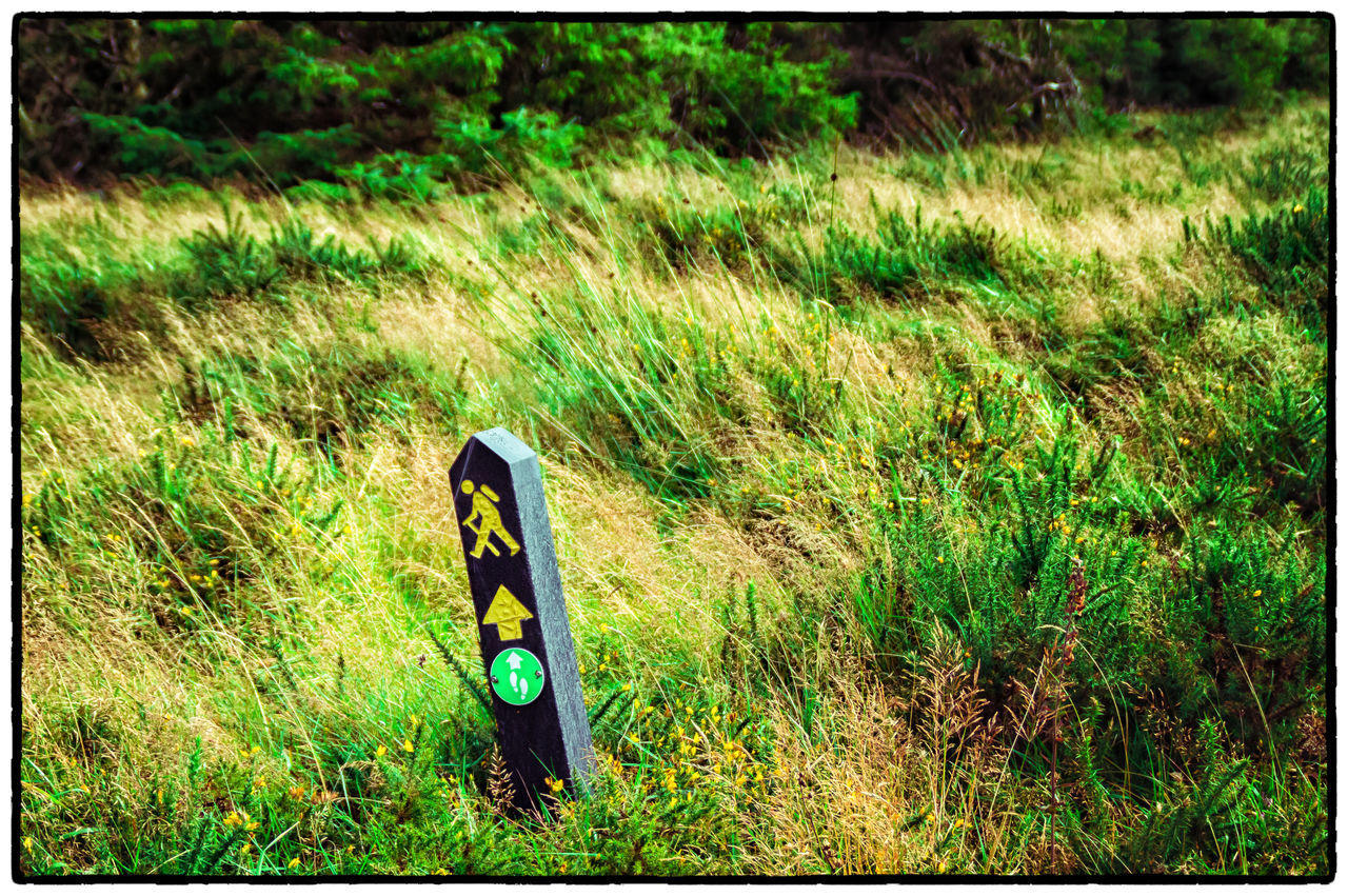 Auto Post Production Filter Day Dublin Dublin Mountains Field Grass Grassy Green Color Growth Ireland Irelandinspires Ireland🍀 Memories Outdoors Signpost Tranquil Scene Tranquility Transfer Print Vignette Walking Around Wicklow Way