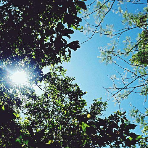 Nature Trees Sky POTD