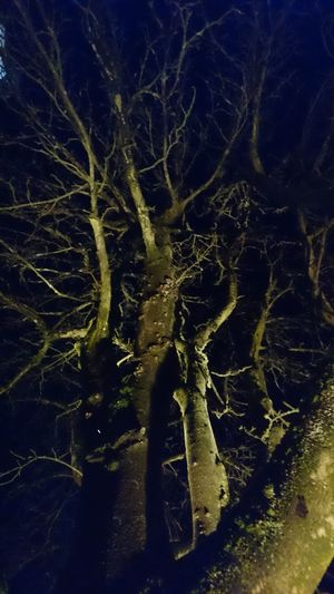 Close-up Illuminated Magic Light Magic Moments Mysterious Mysterious Place Mysteriously Nature Night Nightphotography No People Outdoors Tree Tree At Night Tree Branches Against The Sky Tree Illumination