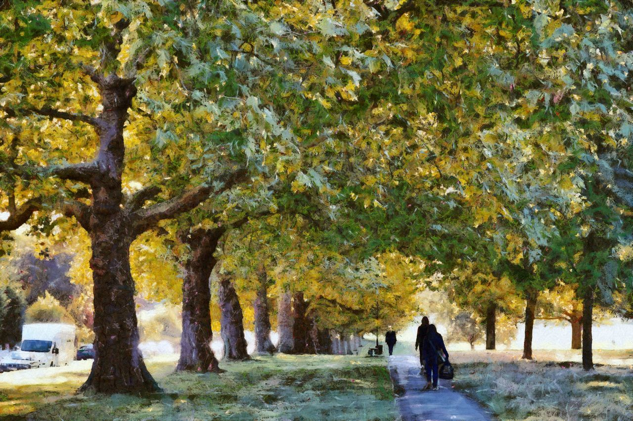 A walk in the autumn on Streatham Common Autumn Avenue Fall Colors Footpath Footpaths London Outdoors Person Photo Manipulation Photo Painting Plane Tree Rear View Scenics Streatham Streatham Common Treelined Trees Vanishing Point