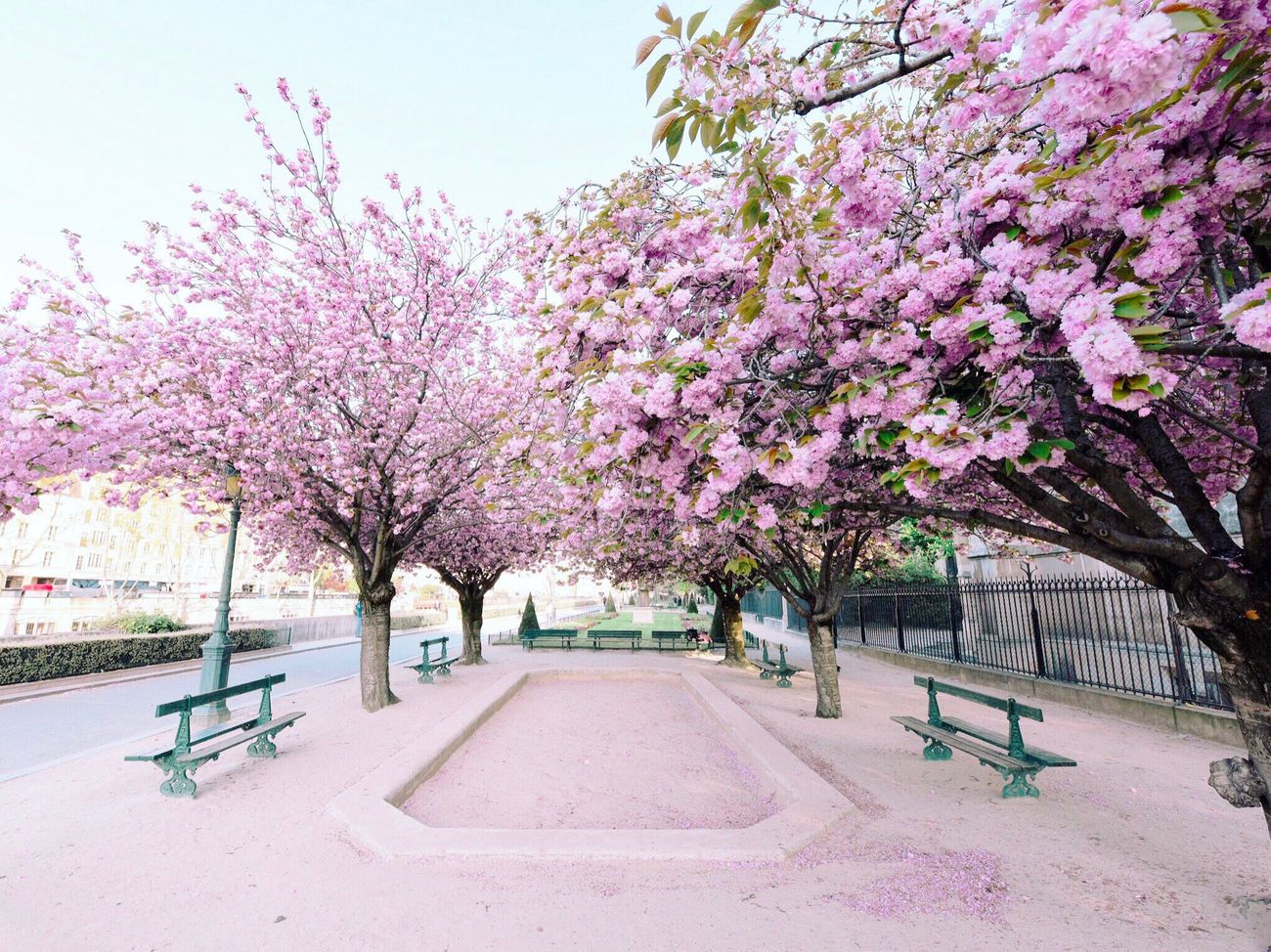 Waiting for spring! Bonsoir Paris Flower Tree Growth Nature Blossom EyeEm Best Shots Parisweloveyou Paris Photooftheday Pink Color Cherry Blossoms