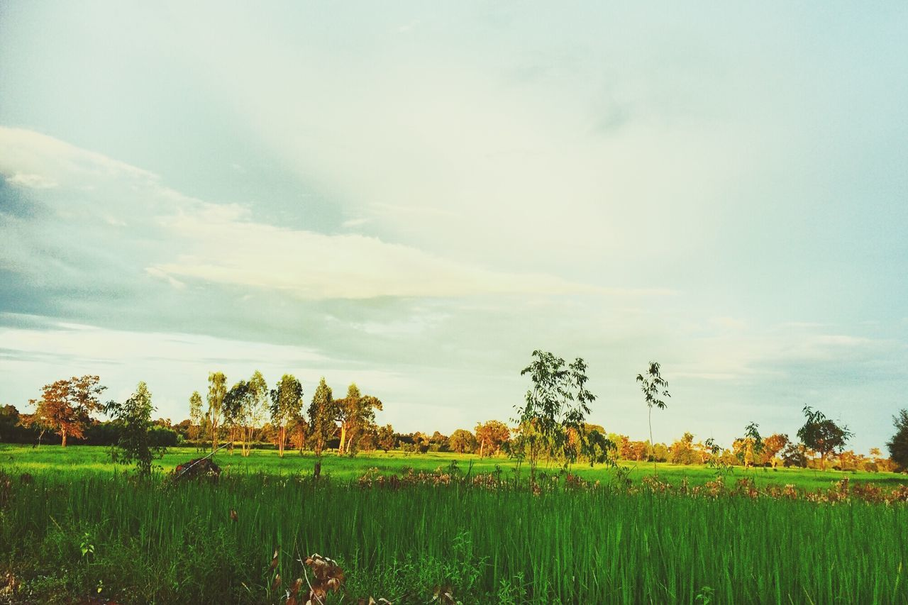 field, agriculture, landscape, farm, growth, sky, nature, rural scene, tranquil scene, tranquility, beauty in nature, scenics, grass, no people, tree, outdoors, plant, day