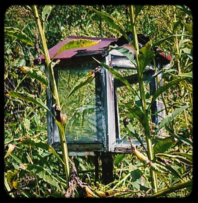 Unsure Of What That Is Maybe Bird Feeder ?