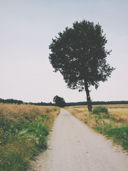 Tree Rural Scene Landscape Agriculture Field Sky Nature Scenics No People Beauty In Nature Tranquility Road Outdoors The Way Forward Day Grass Breathing Space EyeEm Selects Nature Beauty In Nature Green Color The Week On EyeEm Perspectives On Nature