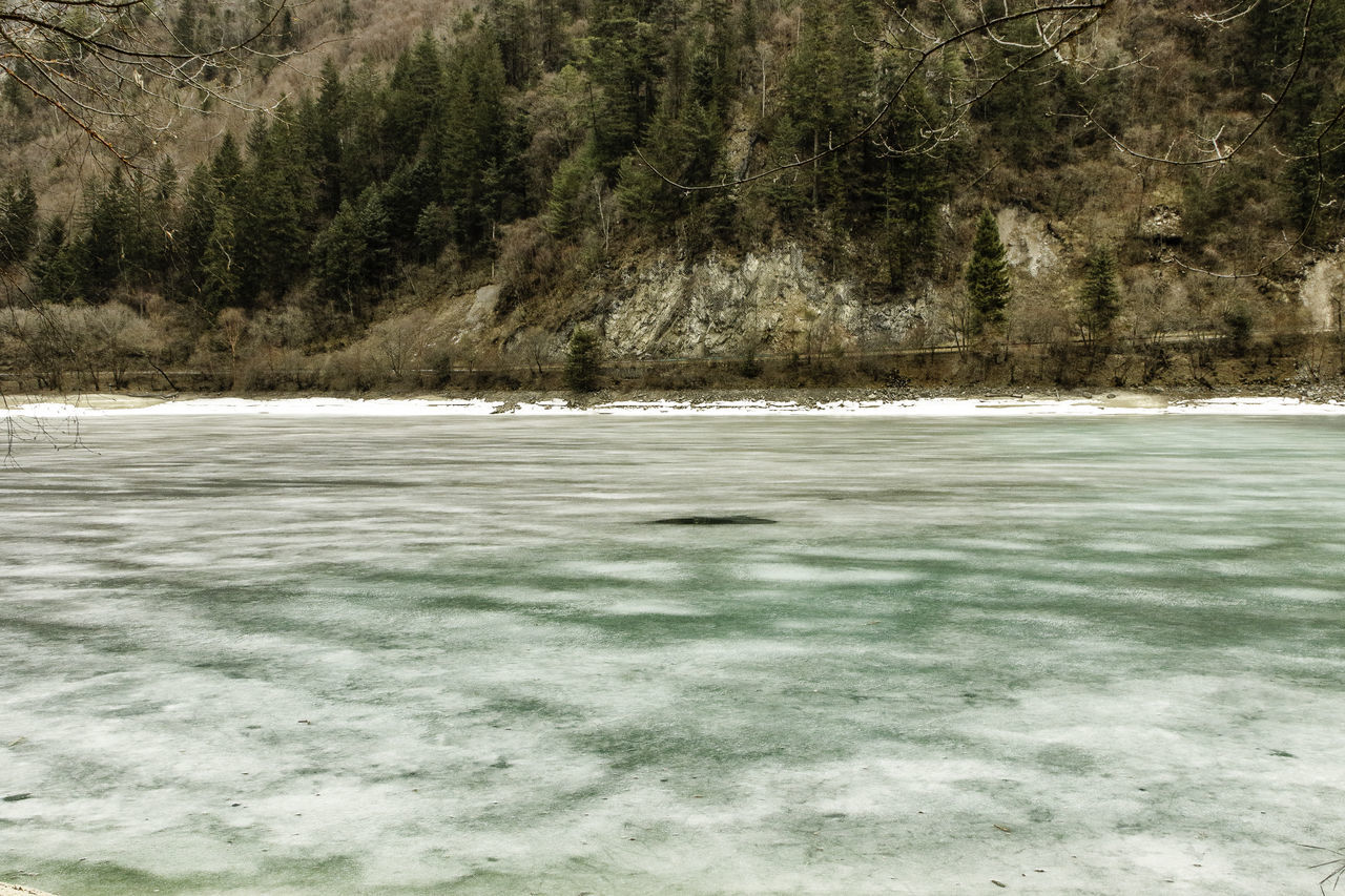 nature, tree, no people, water, tranquility, landscape, scenics, beauty in nature, day, cold temperature, outdoors, mountain