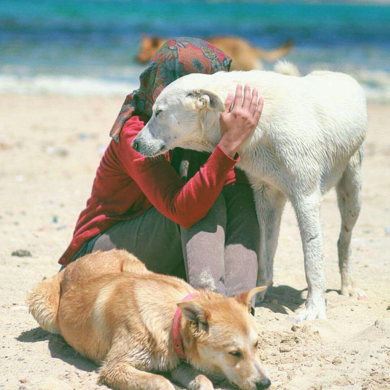 Photographerhibo I Love Dogs Dogs Relaxing Love Lovely Beautiful Portrait Model Doglover Beachphotography Seaside Dog❤ Dogstagram Ilovedogs Lovelovelove Paece Wine Moments