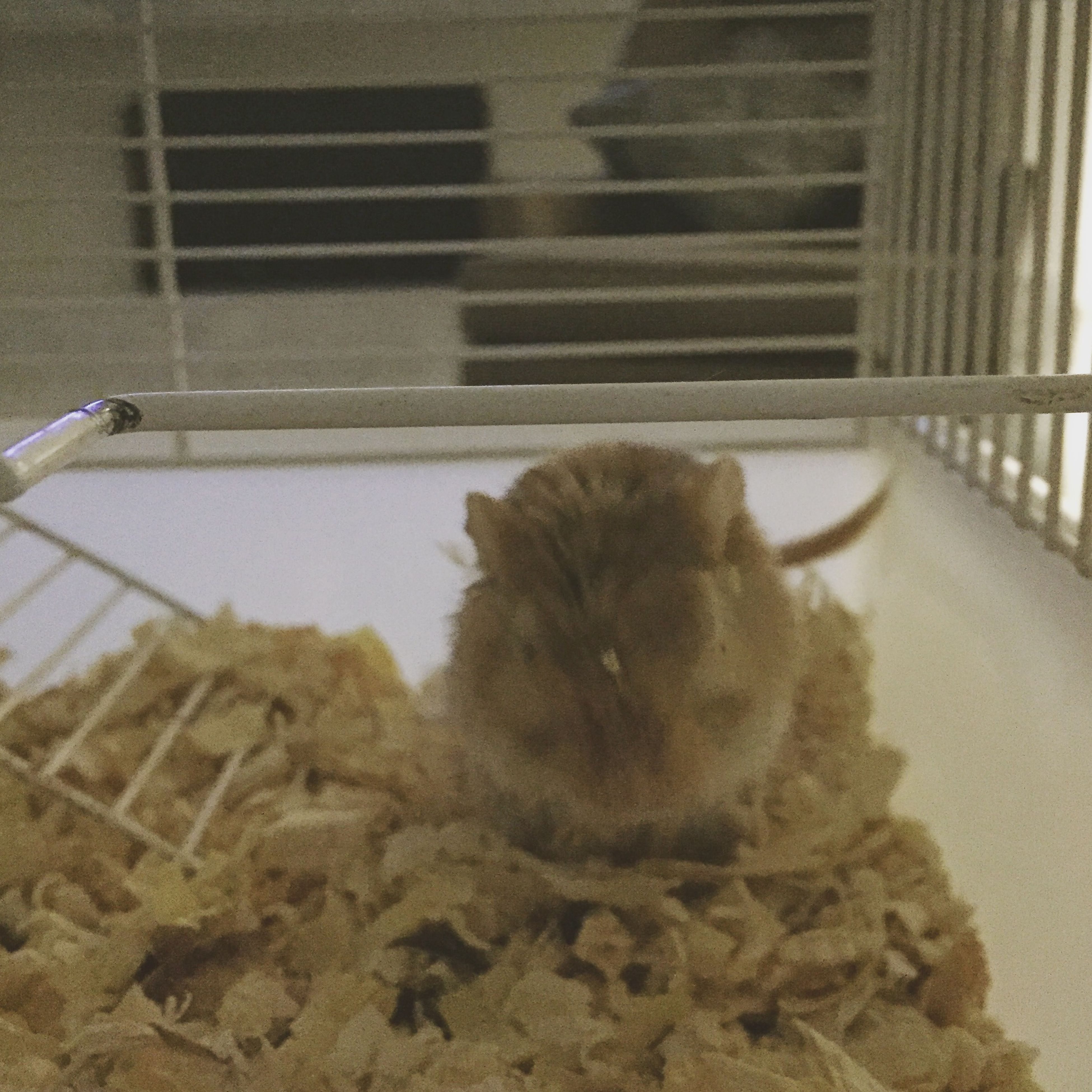 #Mouse Gerbil Cute Pets 🐭🐭🐭🐭