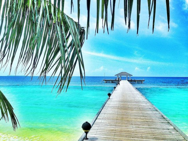 Beach Beauty In Nature Blue Blue Water Blue Water Blue Sky Blue Water Bridge Clear Sky Day Growth Horizon Over Water Island Maledives Nature No People Outdoors Palm Tree Romatic Scenics Sea Shadow Sky The Way Forward Tranquility Tree Water