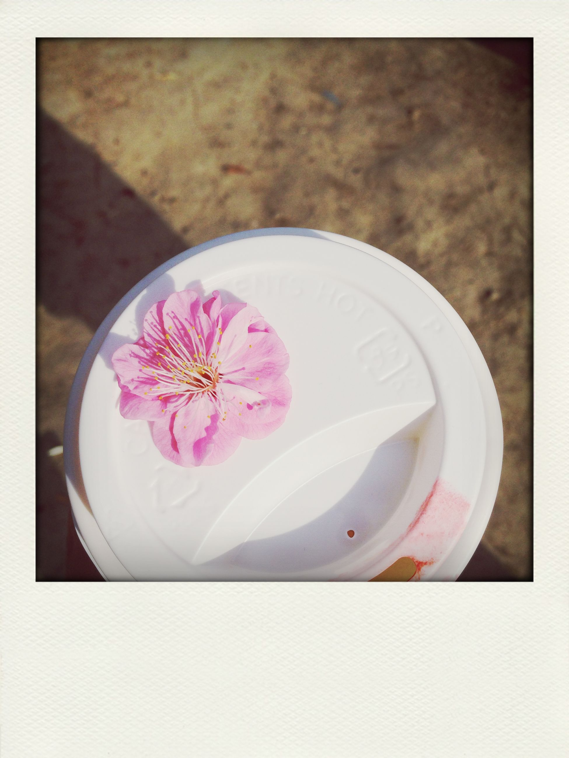 transfer print, freshness, flower, indoors, auto post production filter, close-up, still life, white color, petal, high angle view, table, directly above, pink color, studio shot, food and drink, fragility, white background, flower head, white, no people