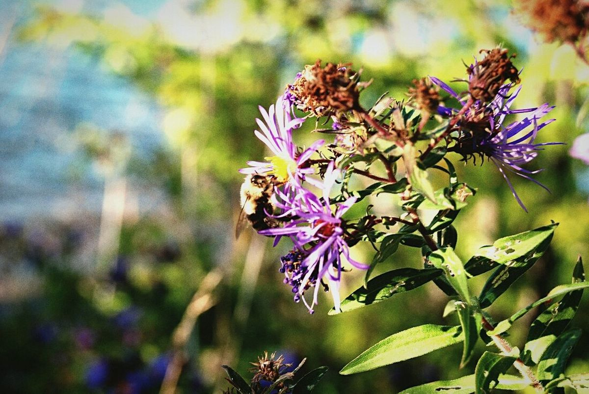 Nature_collection Bee 🐝 Flowers Lake