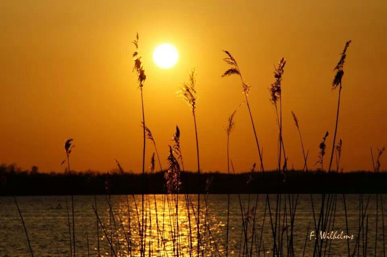 Sunset Silhouettes Sunshine Enjoying The Sunset