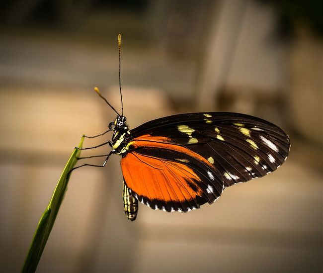 Taking Photos Nature Beauty In Nature RVA Beautiful Colors Butterfly Wings Small Flapping Its Wings Check This Out