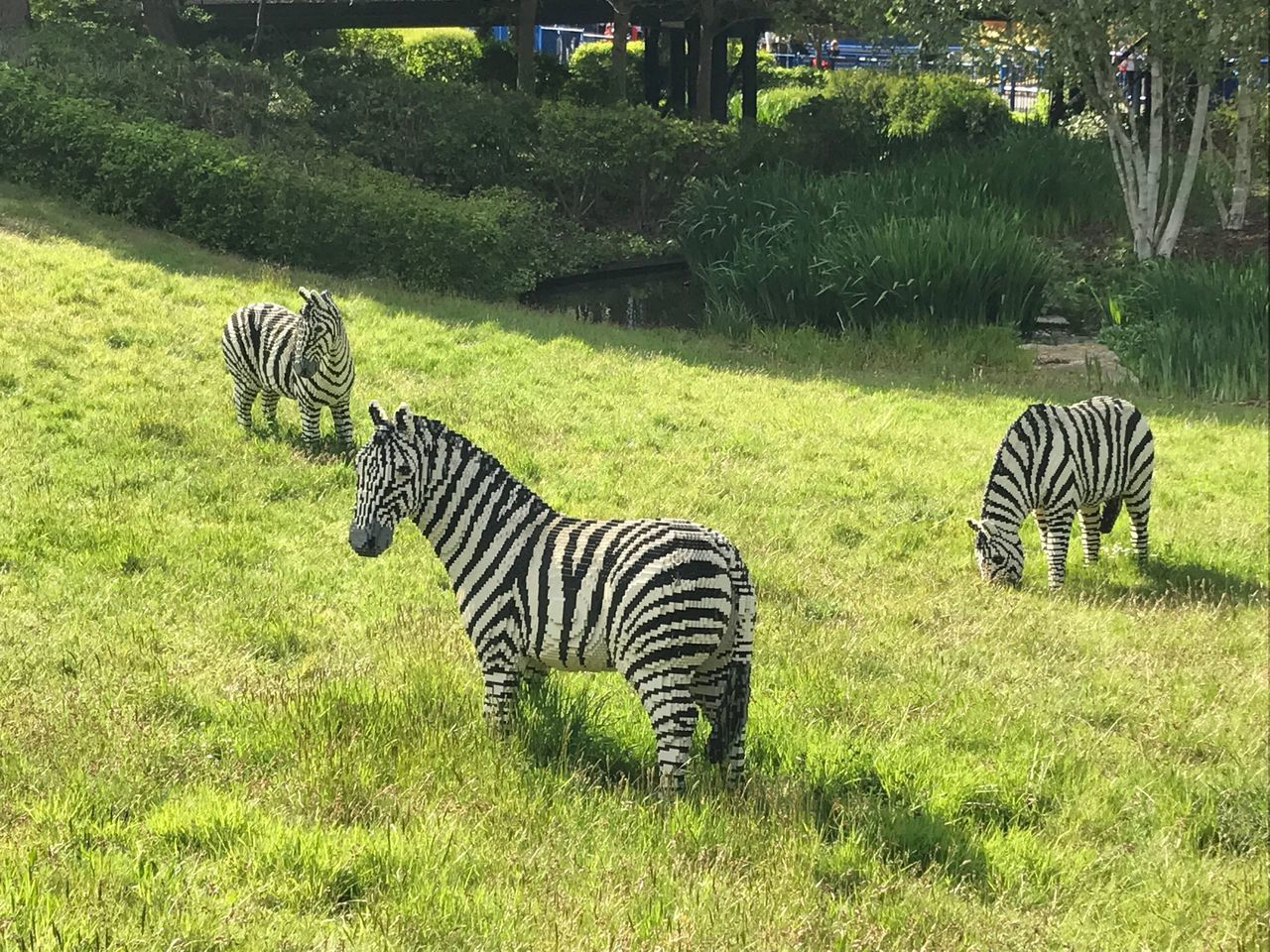 zebra, striped, animals in the wild, animal themes, grass, mammal, green color, animal wildlife, nature, safari animals, day, animal markings, outdoors, no people, tiger