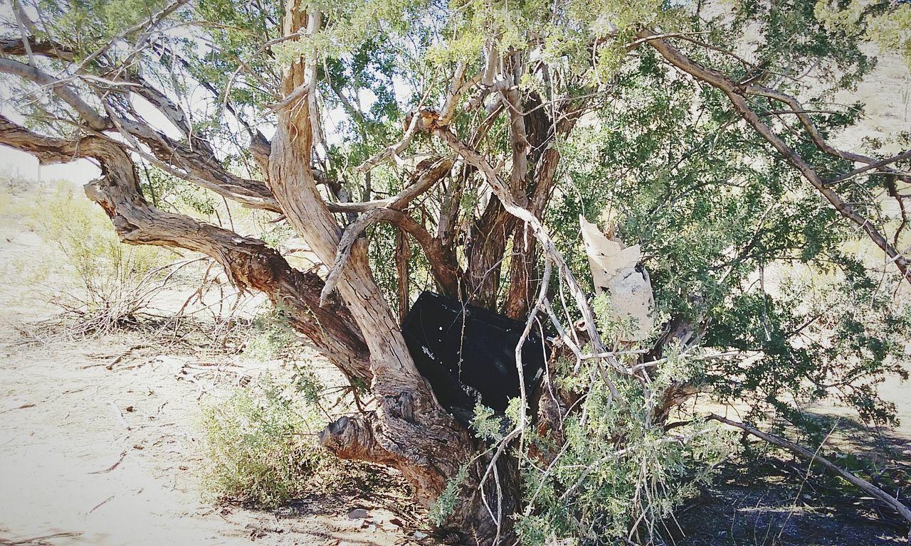 Trees EyeEm Arizona Outdoors Desert