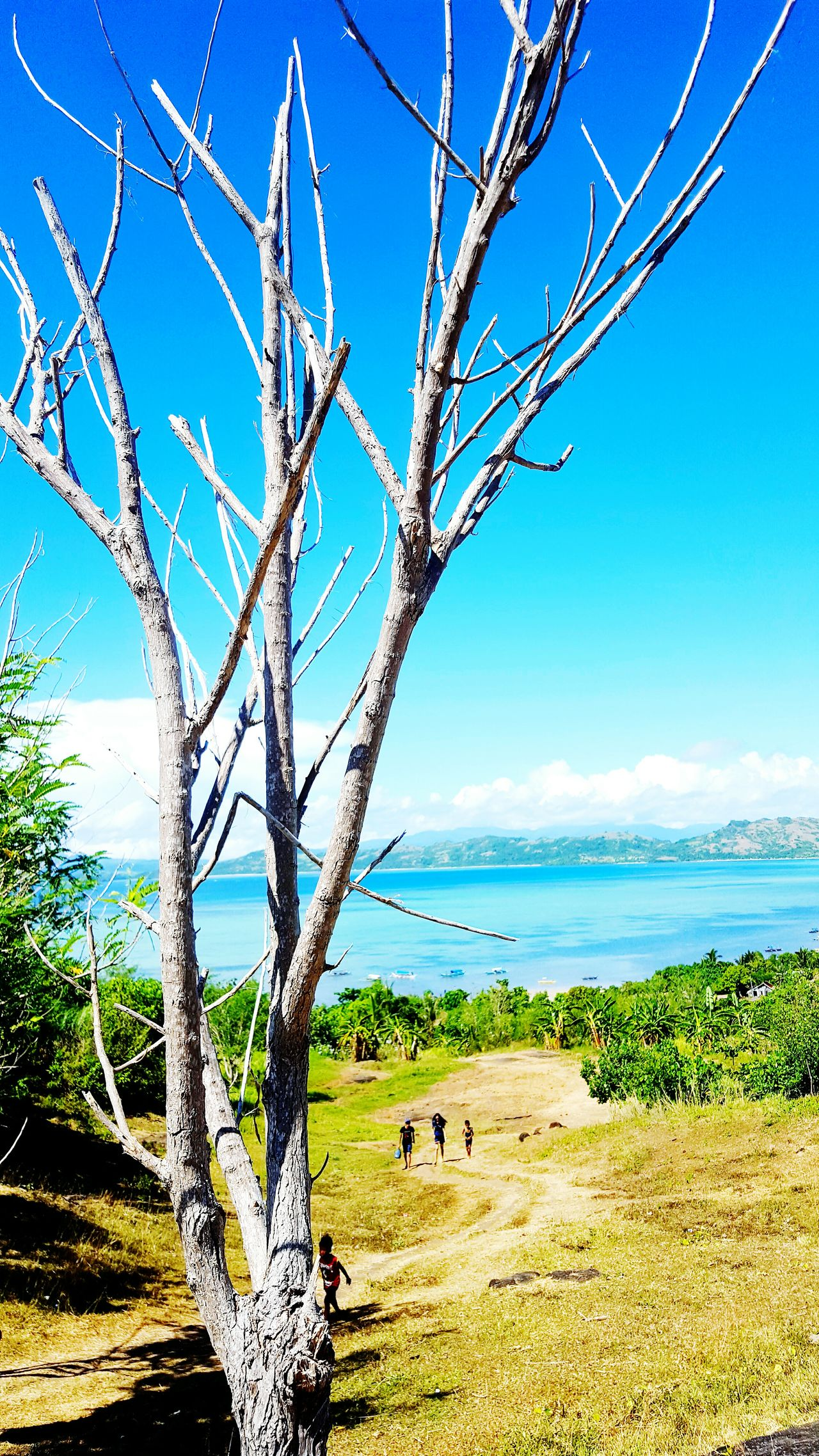 Sea Tree Nature Blue Sky Beach Horizon Over Water Beauty In Nature Water Outdoors Scenics Landscape Day Flower Freshness Travel Destinations Photography In Motion Leaf Photographer In The Shot Nature Photography Photooftheday EyeEm Best Shots Photography Photographer Naturelovers