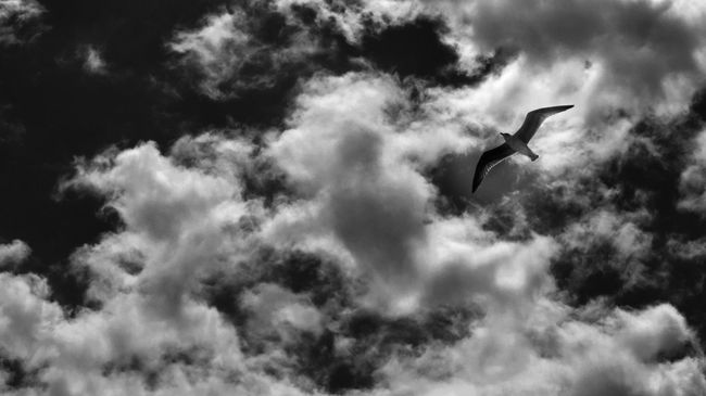 Beauty In Nature Black And White Collection  Blackandwhite Blackandwhite Photography Cloud - Sky Flying A Kite Low Angle View Monochrome Tranquil Scene Tranquility