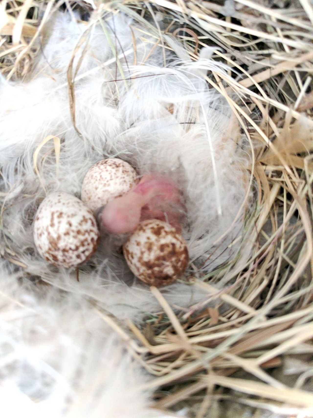 No People Outdoors Close-up Bird Baby Bird Nest Egg Bird Egg Zoom Nature Outdoors Photograpghy  Feathers Of Birds Pink Bird Newborn Birds Sparrow