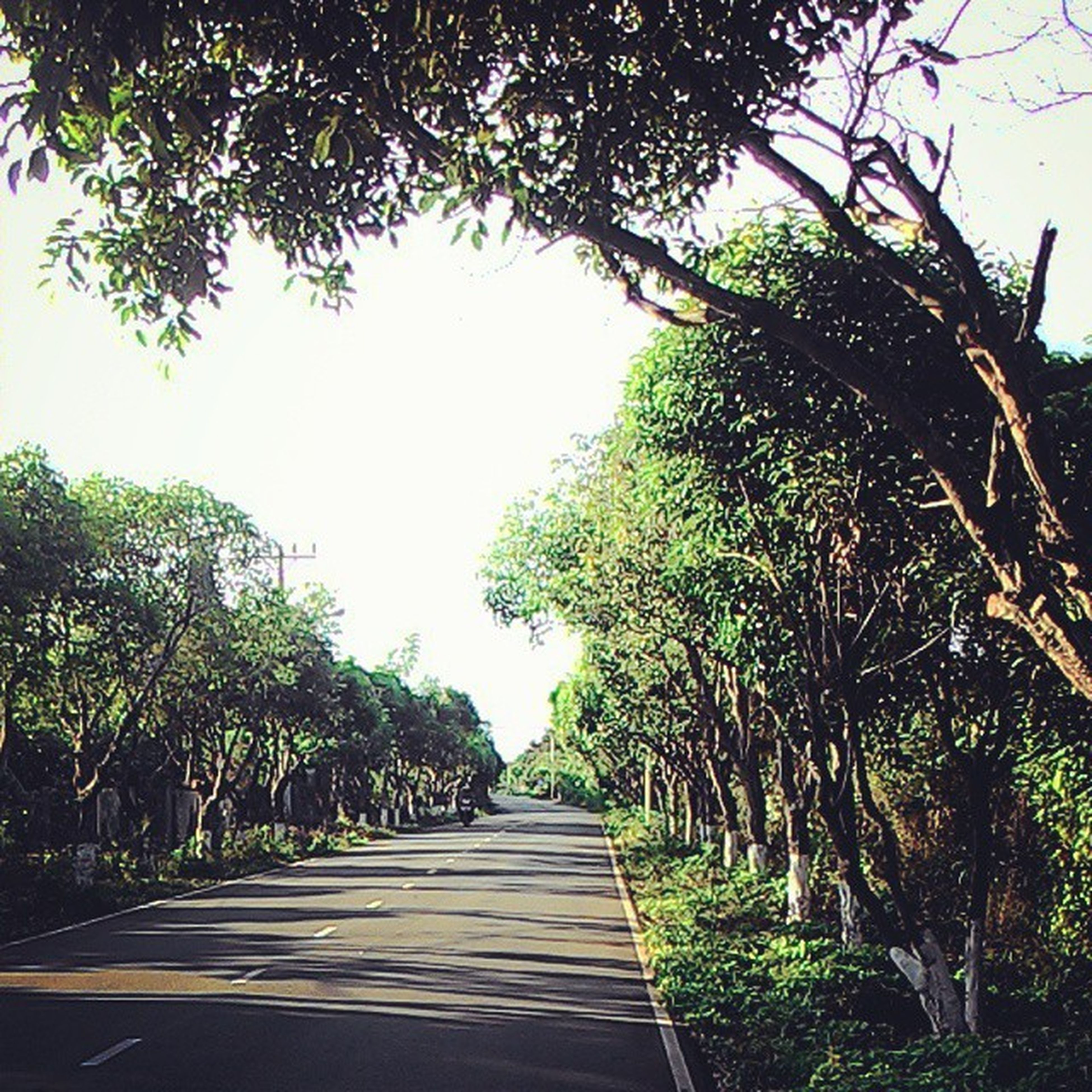 tree, the way forward, clear sky, growth, branch, diminishing perspective, sunlight, low angle view, green color, nature, tranquility, footpath, railing, day, sky, walkway, outdoors, vanishing point, no people, tree trunk