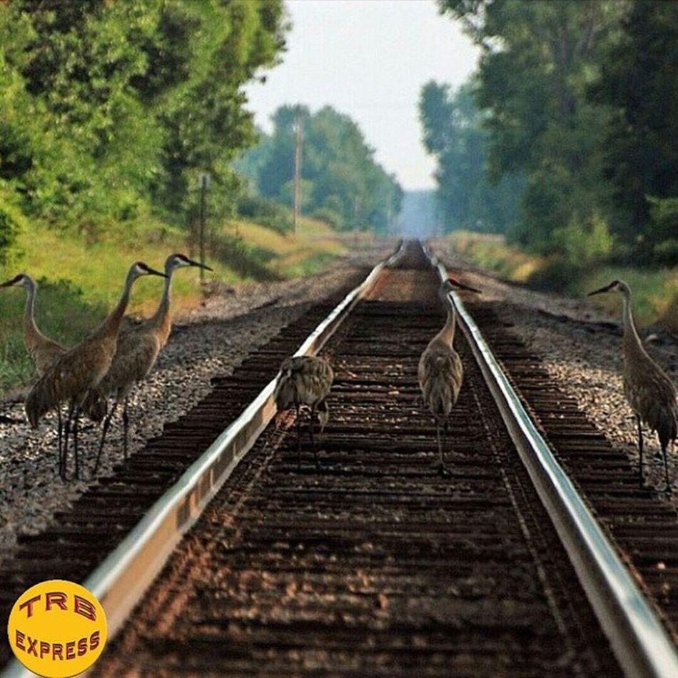 Trains_worldwide Rail_barons Trailblazers_rurex Trb_collabs Trailblazers_urbex Trb_autozone Bipolaroid_asylum Trainphotography Splendid_transport Trb_country Jj_transportation Ig_photolove Trb_random Trb_bnw Trb_rural Ig_shutterbugs Loves_transports Trb_express Railmarkable Railways_of_our_world Railfans_of_instagram Courageous_art Ig_trainspotting Trains_r_the_best Train_of_our_world Trainportal Udog_peopleandplace
