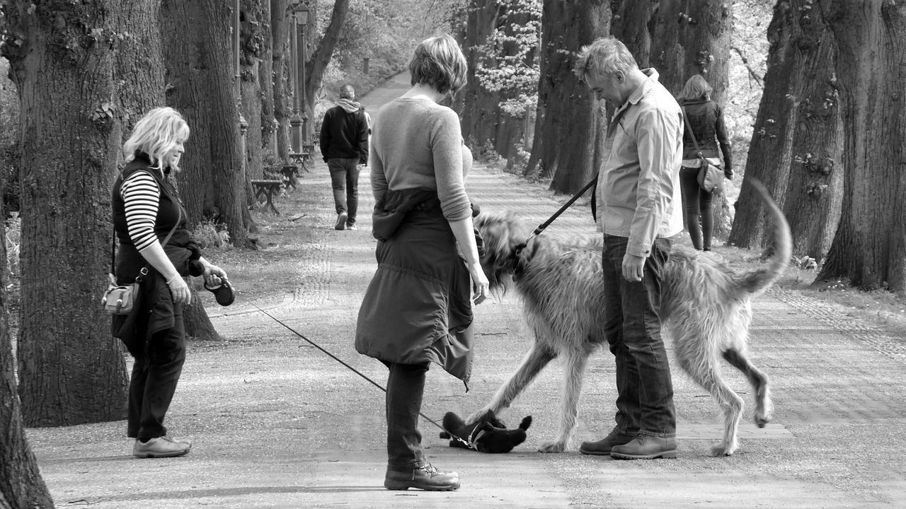 The gentle giant and his tiny playmate....!! Live For The Story Wolfhound Tiny Terrier Walking Outdoors Little And Large Pals Day People Togetherness Real People Adult Friendship Playmates Tree Lined Road Cute Dog  Pets Domestic Animals Amusing Photo Gentle Giant Dogs Of EyeEm
