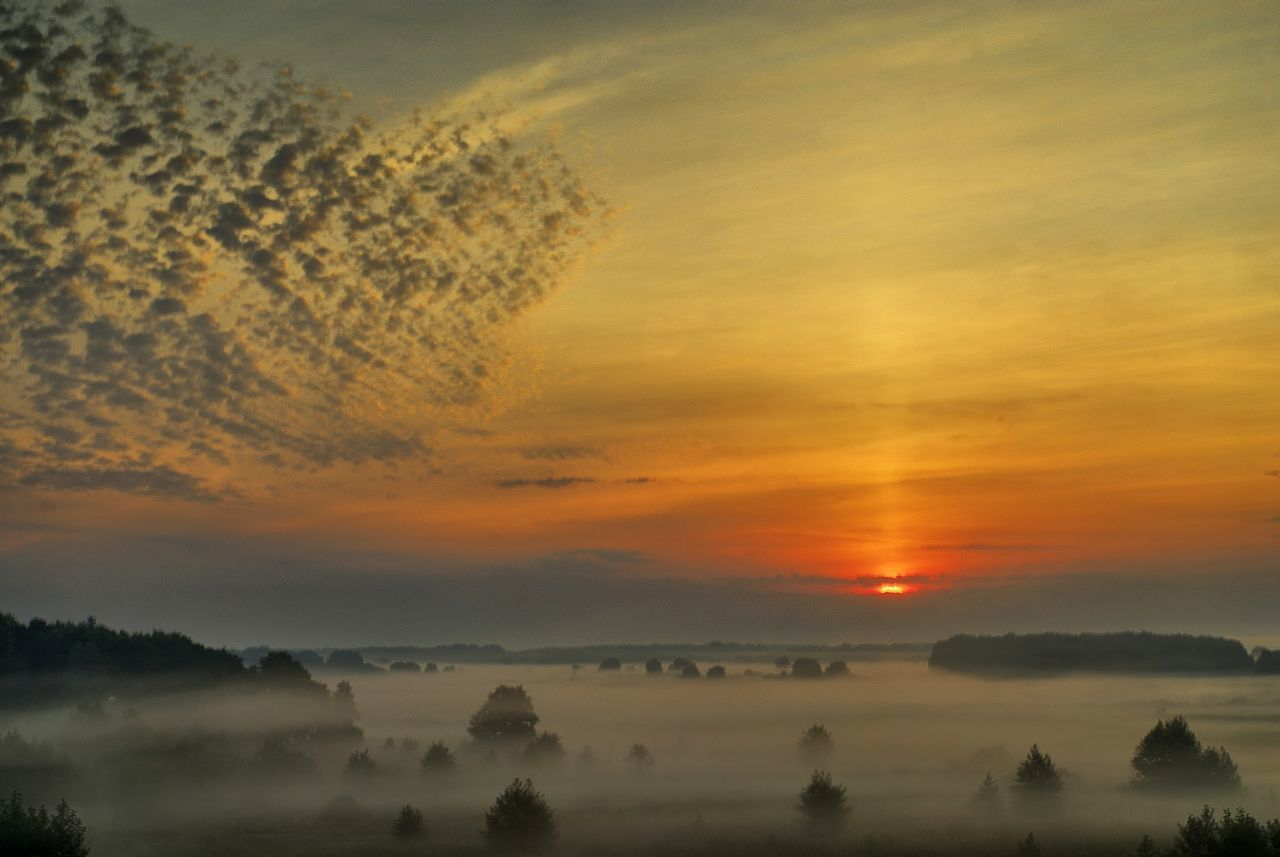 High Angle View Of Silhouette Trees On Landscape In Foggy Weather At Sunset