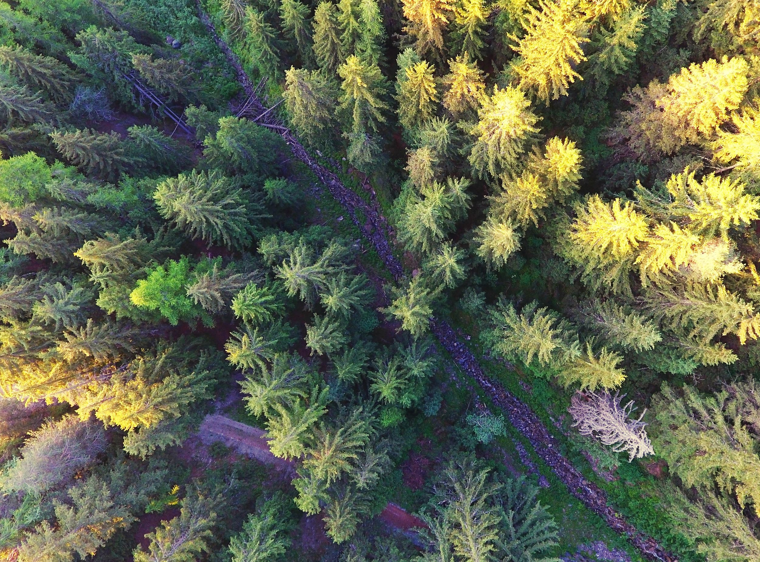 Look out. Nature No People Beauty In Nature Dronephotography Outdoors Into The Wild Aerial View Pinetrees Pine Woodland Mountains And Valleys AlpsMountain Forest Nature Photography Alps High Mountain Road