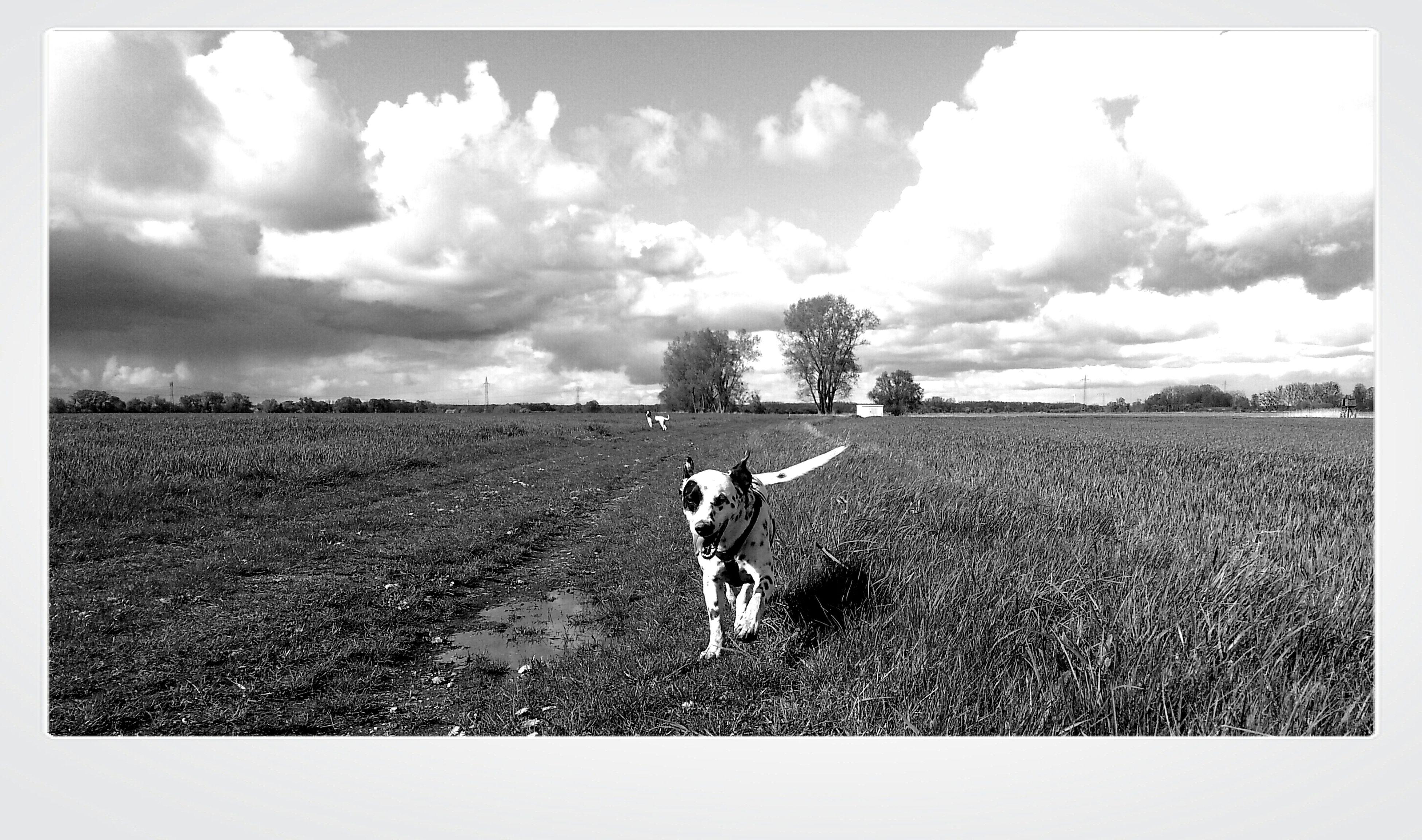 Spaziergang mit dem geliebten Hund / der geliebte Vierbeiner. Blackandwhite Photography Blackandwhite