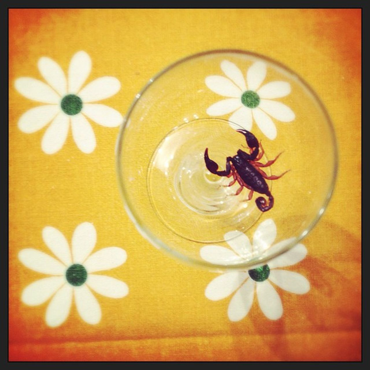 Summer Flowers Holidays Scorpion Ospitenongradito