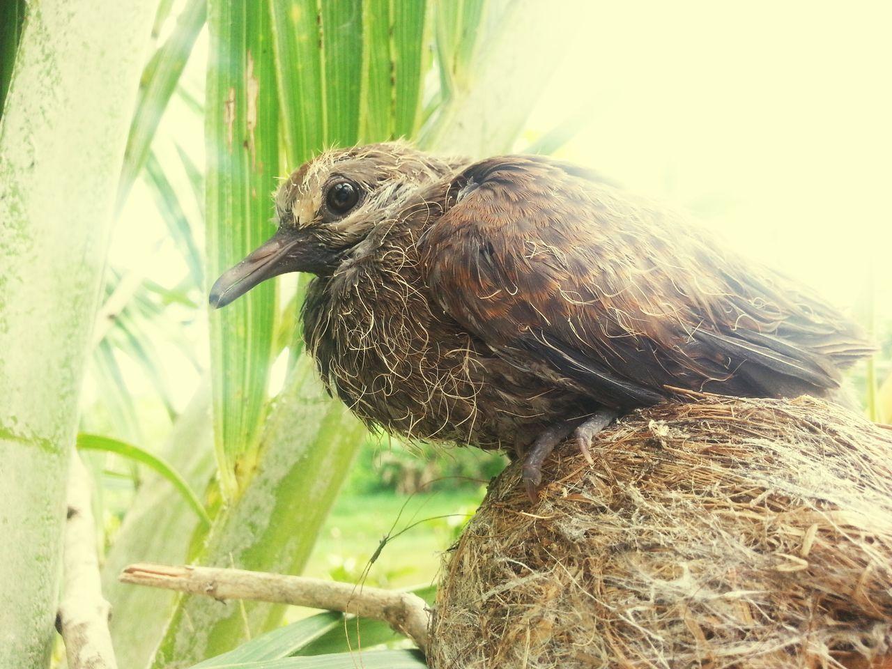 Birds eyeview. . . Brown Brownbird Bird Photography Birds Bird Birds🐦⛅ Birds_collection Birds_n_branches Birdsnest Nest Youngbird