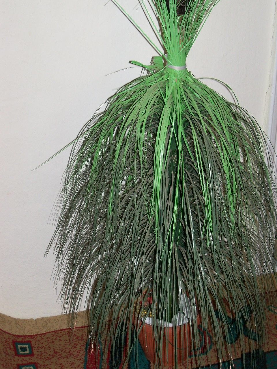 green color, no people, growth, close-up, indoors, day