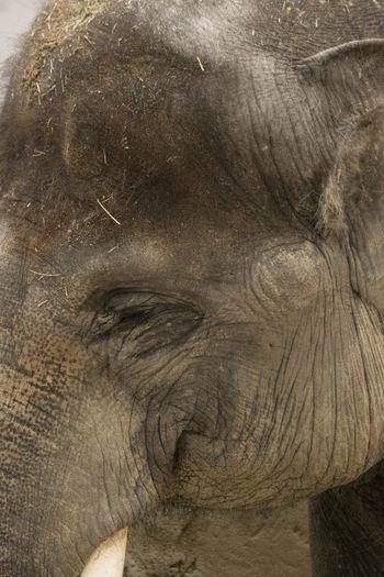 Zoo de Madrid Animal Themes Animal Wildlife Close-up Elephant Eye Nature No People One Animal Proboscis Butterfly