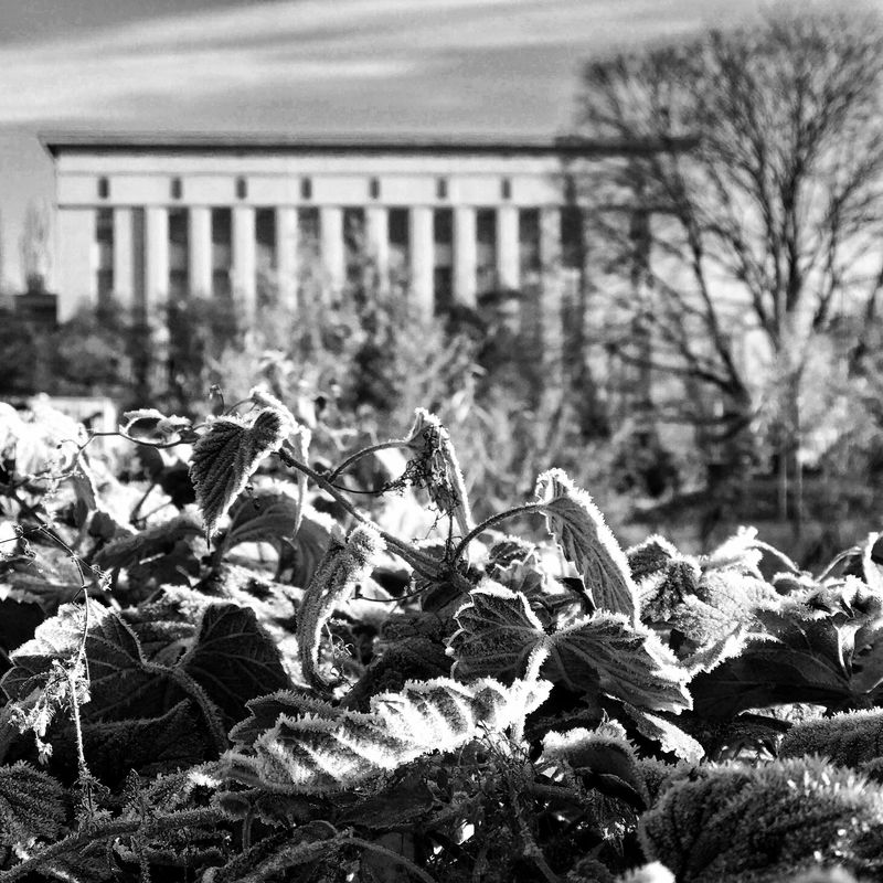 Morning Frost Architecture Beauty In Nature Berghain Building Exterior Close-up Focus On Foreground Frost Nature Plant