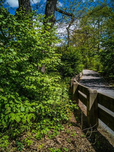 Park Set RahimNoel Rahim NYC NY New York Vivid Central Park - NYC Green ❤ Beauty In Nature Calm Inspirational