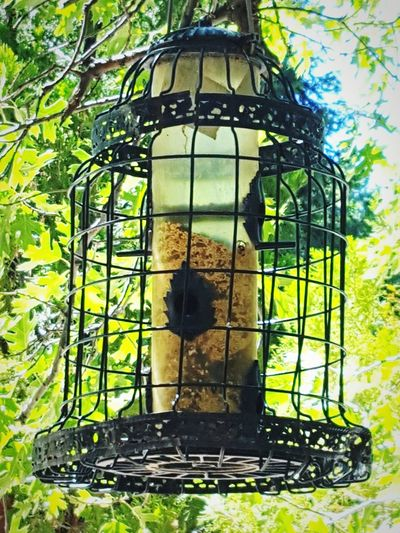 Waiting For The Bird To Come Visit Outdoor Photography Nature Photography Birds Birdfeeder Birdcage Perspective ForTheLoveOfPhotography Trees Sunshine Abundance Nature Beauty In Nature Eye4photography  From My Point Of View Outdoors EyeEm Eyeemphotography