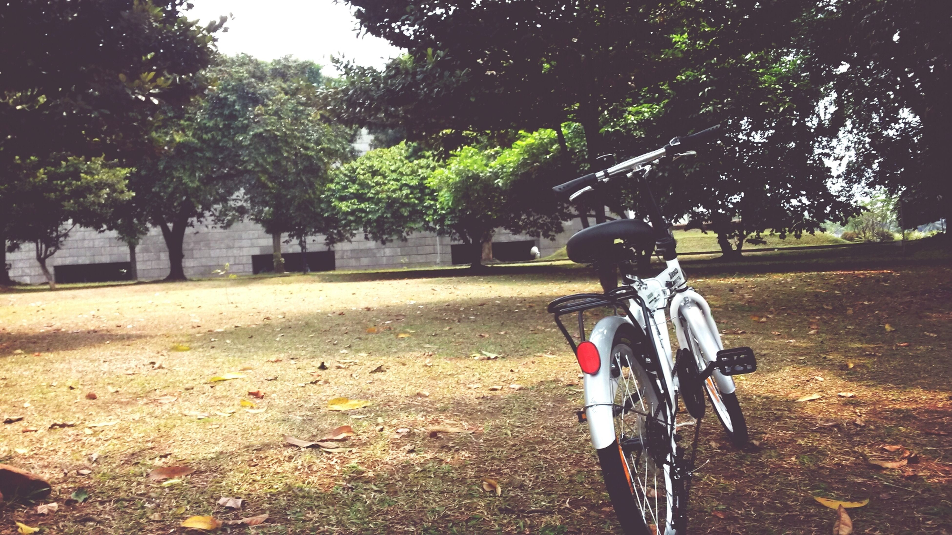 tree, transportation, bicycle, land vehicle, full length, lifestyles, mode of transport, leisure activity, men, sunlight, riding, rear view, road, street, casual clothing, shadow, day, childhood