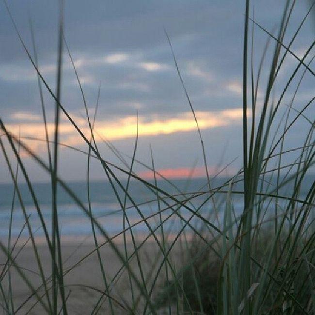 Summer Sunn Green Flower Chiclana Labarrosa Instalike Instamemories Instapaisaje Paisaje Like Like4like Like4follow Landscape #Nature #photography Landscape_Collection Landscape_photography Landscape Perfect