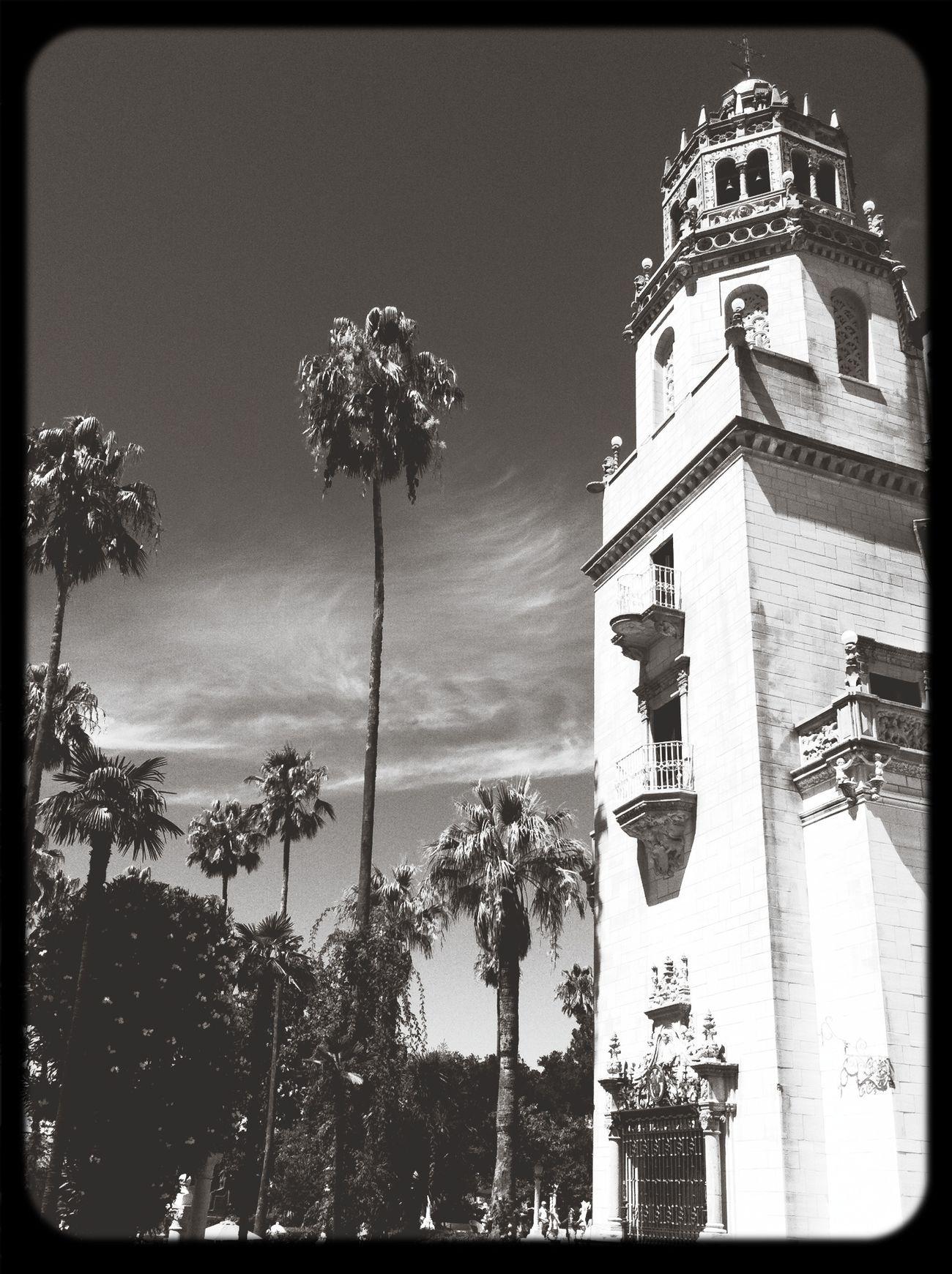 Capa Filter California Palms Black & White