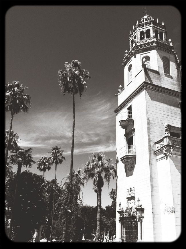 Capa Filter California Palms Black & White